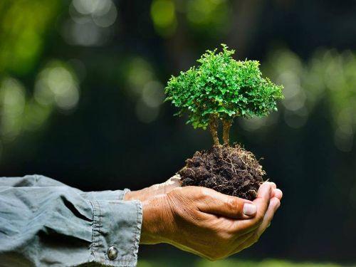 Hình minh họa: Ăn chay góp phần xây dựng một cuộc sống xanh